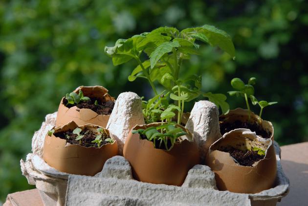 Yeryüzü Derneğinden Kent Bahçeleri Projesi